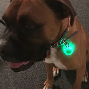 Pair of Flashing Lights for Walking your Dog